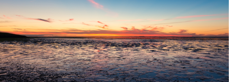 Faszination Wattenmeer – alle Informationen über das Weltnaturerbe