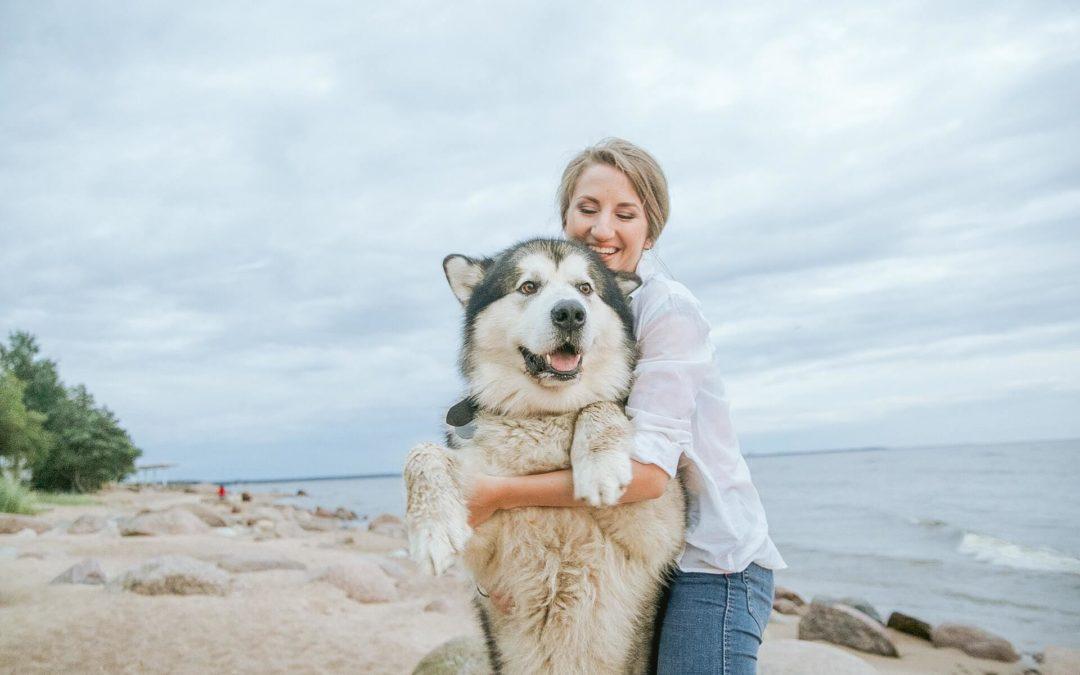 Urlaub mit dem Hund: So klappt die Reise problemlos
